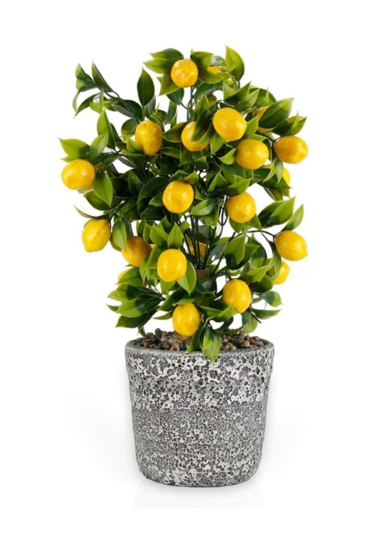 Porselen Saksıda Limon Ağacı